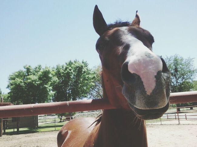 Horse ♥