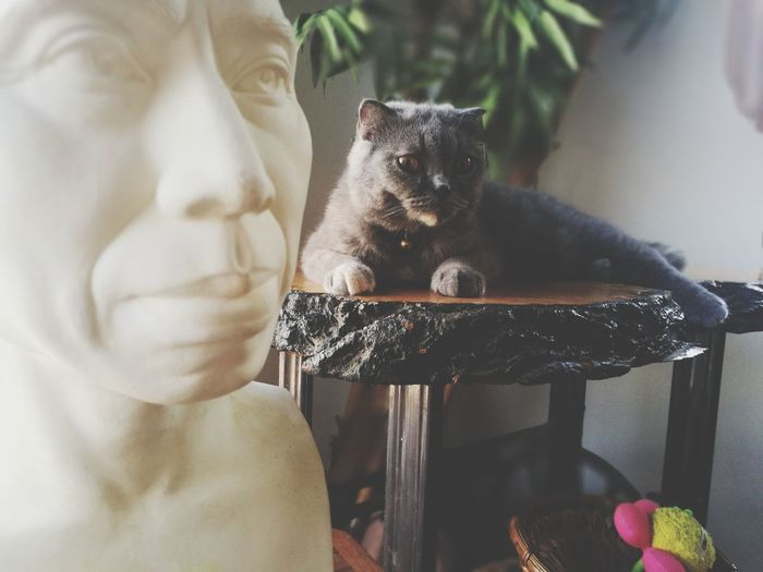 Close-up of cat sitting on statue