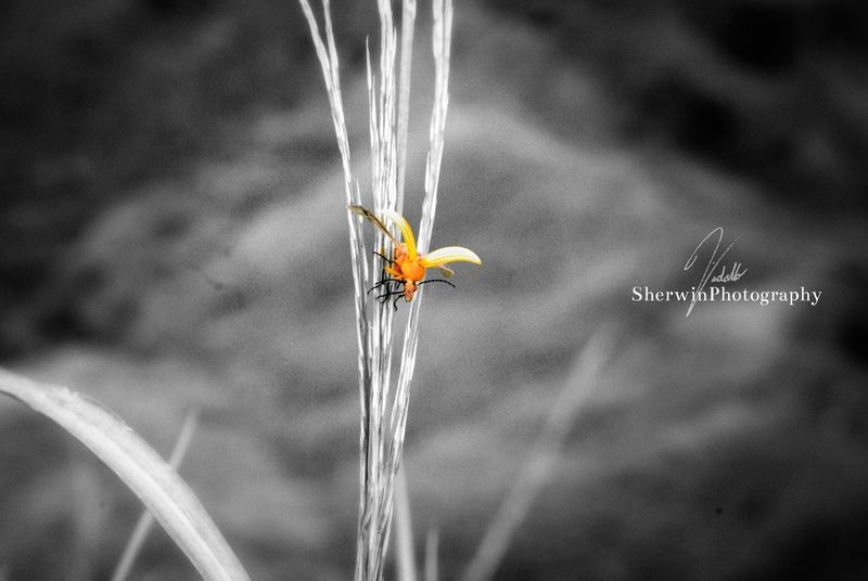 Eyeem Philippines Bugs Life Monochrome Learning To Fly