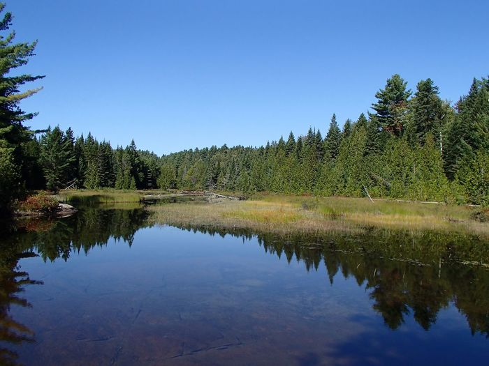 Marais - Marsh (Parc national de la Mauricie) Marsh Sky Reflection Tree Plant Water Tranquility Tranquil Scene Beauty In Nature Clear Sky Outdoors