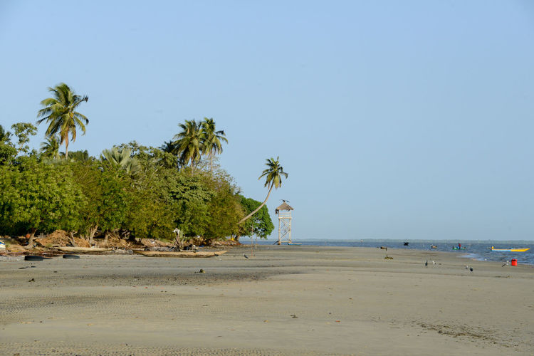 Pointe Saint-Georges in the Casamance Senegal Kanoufa Pointe Saint-Georges Africa Beach Beauty In Nature Casamance Clear Sky Day Nature Outdoors Palm Tree River Sand Scenics Senegal Shore Sky Tranquil Scene Water