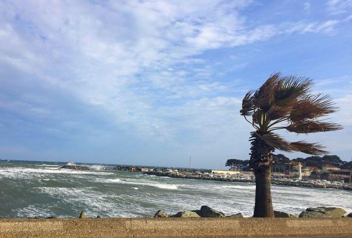 Sea Sky Beach Water Palm Tree Nature Mer Mediterranée Tempête Vent Mer Vagues