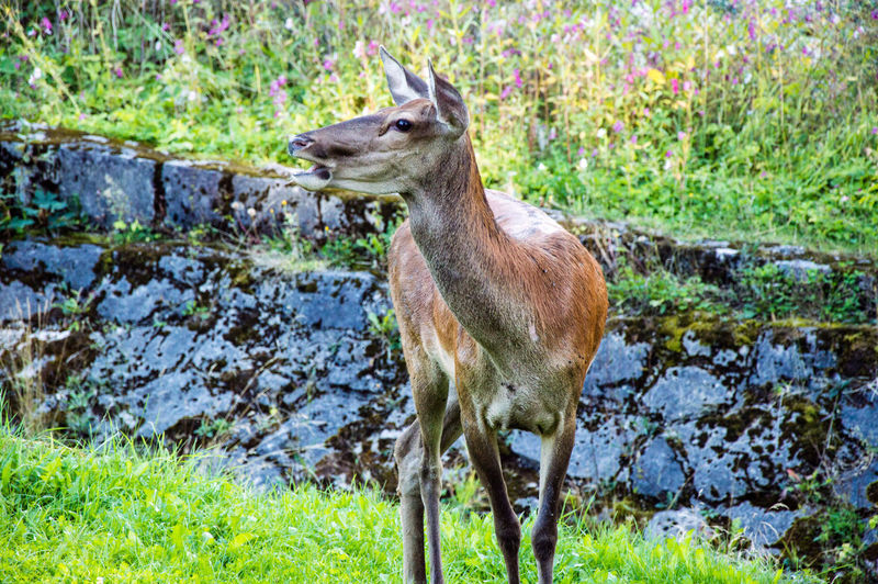 One Animal Animals In The Wild Animal Themes Day Animal Wildlife Mammal Grass Nature Outdoors No People Field Zakopane Poland Travel Beauty In Nature Leisure Activity Scenics Nature Tree Domestic Animals Destination Hiking Landscape Mountain