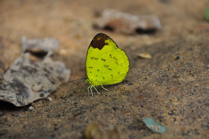 Animal Themes Animals In The Wild Close-up Day Fragility Insect No People Outdoors Yellow