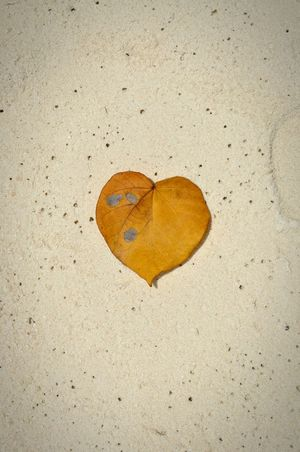 Love Leaf Beautiful Beach Sand Maldives Heart Natural Beauty Wedding Message To Love 43GoldenMoments Place Of Heart Sommergefühle Mix Yourself A Good Time Paint The Town Yellow