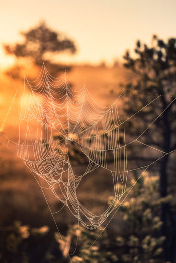 Close-up of spider web against sky during sunset
