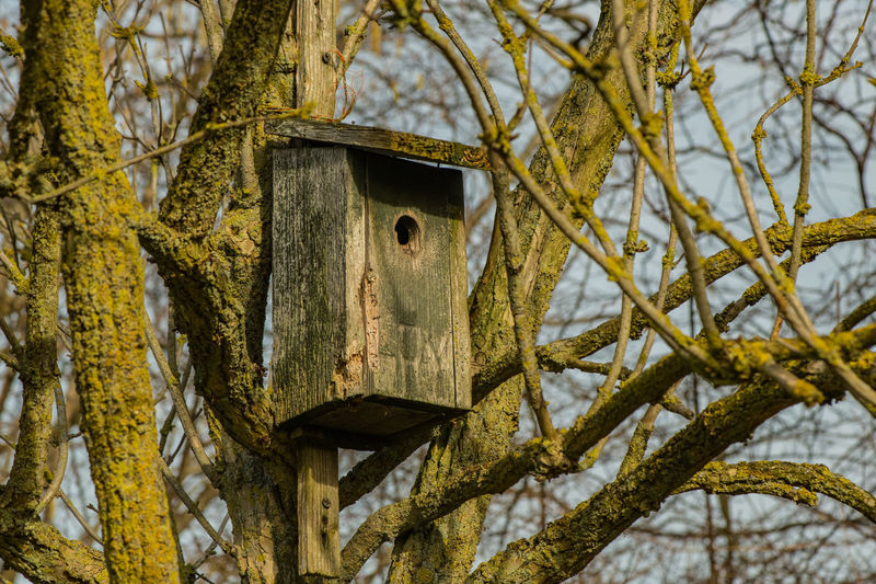 Close-up Low Angle View Animal Themes Tree Trunk Birdhouse Tree Branch No People Nature Plant Trunk Bird Hanging Wood - Material Bird Nest