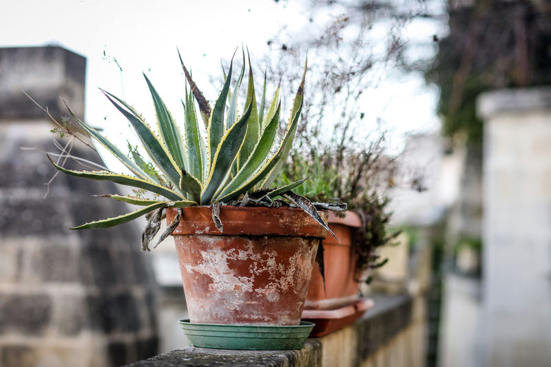 Potted plants Matera Matera Italy Matera2019 Matera - Capitale Della Cultura Matera View Plant Potted Plant Growth Day No People Outdoors Succulent Plant Front Or Back Yard Built Structure Houseplant Container Historical Sights Italy