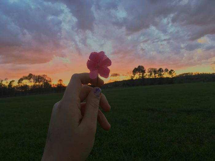 Midsection of man holding flower on field against sky at sunset