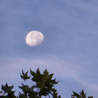 Esta mañana en Zaragoza Moon Lunalunera Skylovers clouds tree sky Zaragozadestino igerszgz igersaragon igersSpain photoofclouds cirros