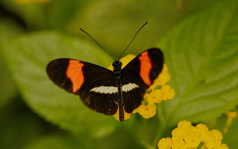 Animal Themes Animal Wildlife Animals In The Wild Beauty In Nature Butterfly Butterfly - Insect Insect Nature No People One Animal