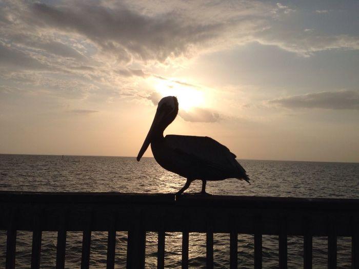 Pier Sea Sunset Water Horizon Over Water One Animal Animals In The Wild Animal Themes Silhouette Bird Perching