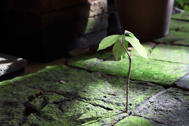 Beauty In Nature Beginnings Business Concept Close-up Day Dirt Focus On Foreground Green Color Growth Leaf Metaphorical Photography Moss Nature No People Outdoors Plant Plant Part Potted Plant Rock Rock - Object Selective Focus Solid