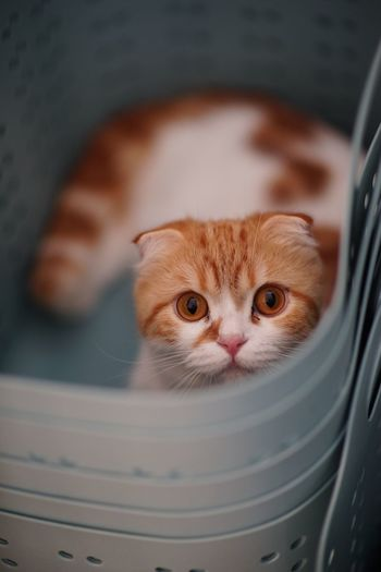 Close-up portrait of kitten in container