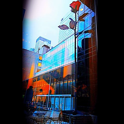 Love Yourself Taking Photos Eye4photography  Red Rose 🌹 MoMA New York NYC ArtWork Sculpture EyeEm Gallery Live For The Story NYC LIFE ♥