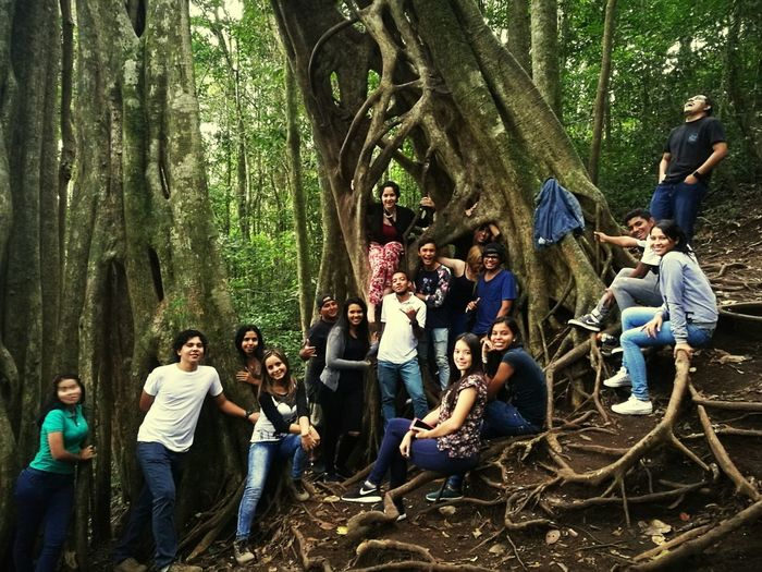 People And Places Tree Forest FicusMonteverdecostarica