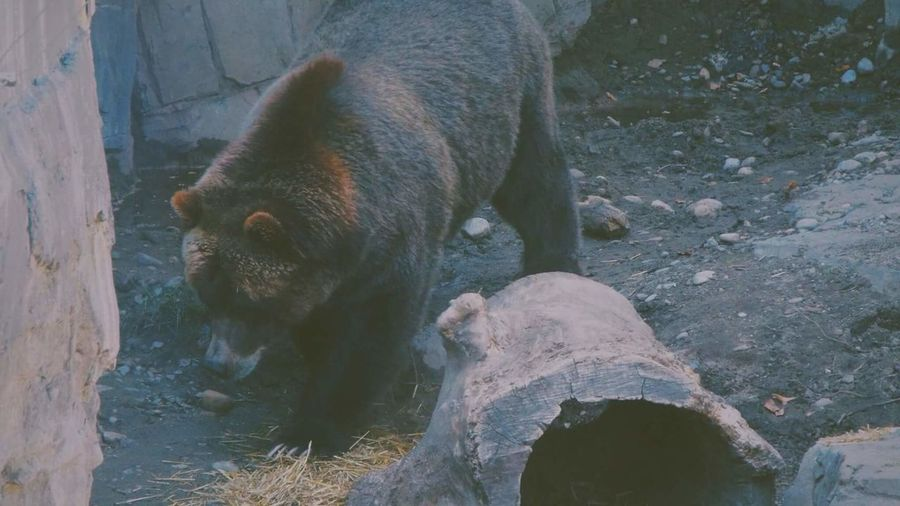 Aniamls Bear Zoo By Me Animal Themes Mammal High Angle View One Animal Animal Animal Wildlife No People Nature Outdoors Horizontal Animals In The Wild Day First Eyeem Photo