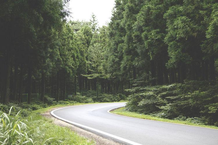 Beauty In Nature Curve Day Forest Growth Jeju JEJU ISLAND  Jeju_korea Jejudo Jejuisland Korea Landscape Nature No People Outdoors Plant Road Scenics The Way Forward Tranquility Transportation Tree