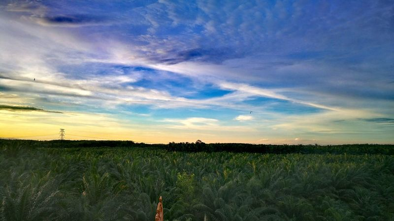 Great Sky Sunset Scenery View Landscape Photography Nature Of Beauty Green Color Yellow Color Blue Color