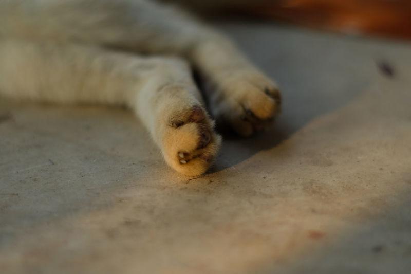 cat Animal Feet Cat Teeth Animal Nose Cat At Home Animal Hospital Seal - Animal Examination Table
