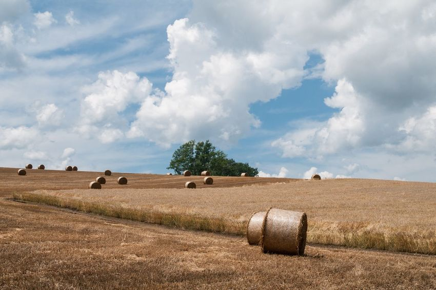 Nature Sky Landscape Tree Day Field Farm Plant Land Agriculture Environment Beauty In Nature No People Cloud - Sky Scenics - Nature Bale  Hay Rural Scene Tranquil Scene Tranquility Harvesting