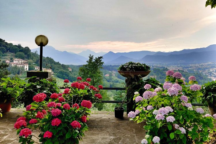 Flowering plants by potted plant against sky