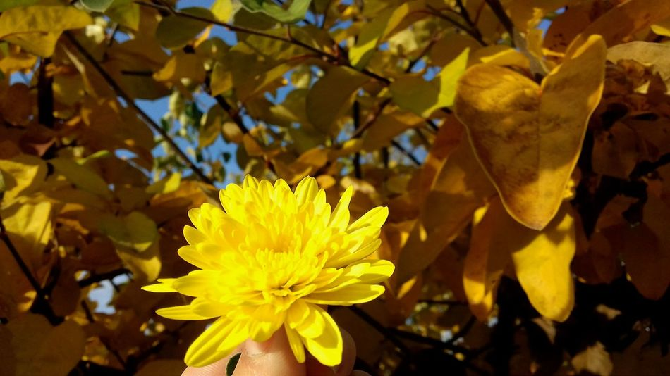 Autumn Colors BeutifulNature Vivid Colours  Creativity First Eyeem Photos Beutiful Moments.  Autumn Day Nature Flower Arrangement