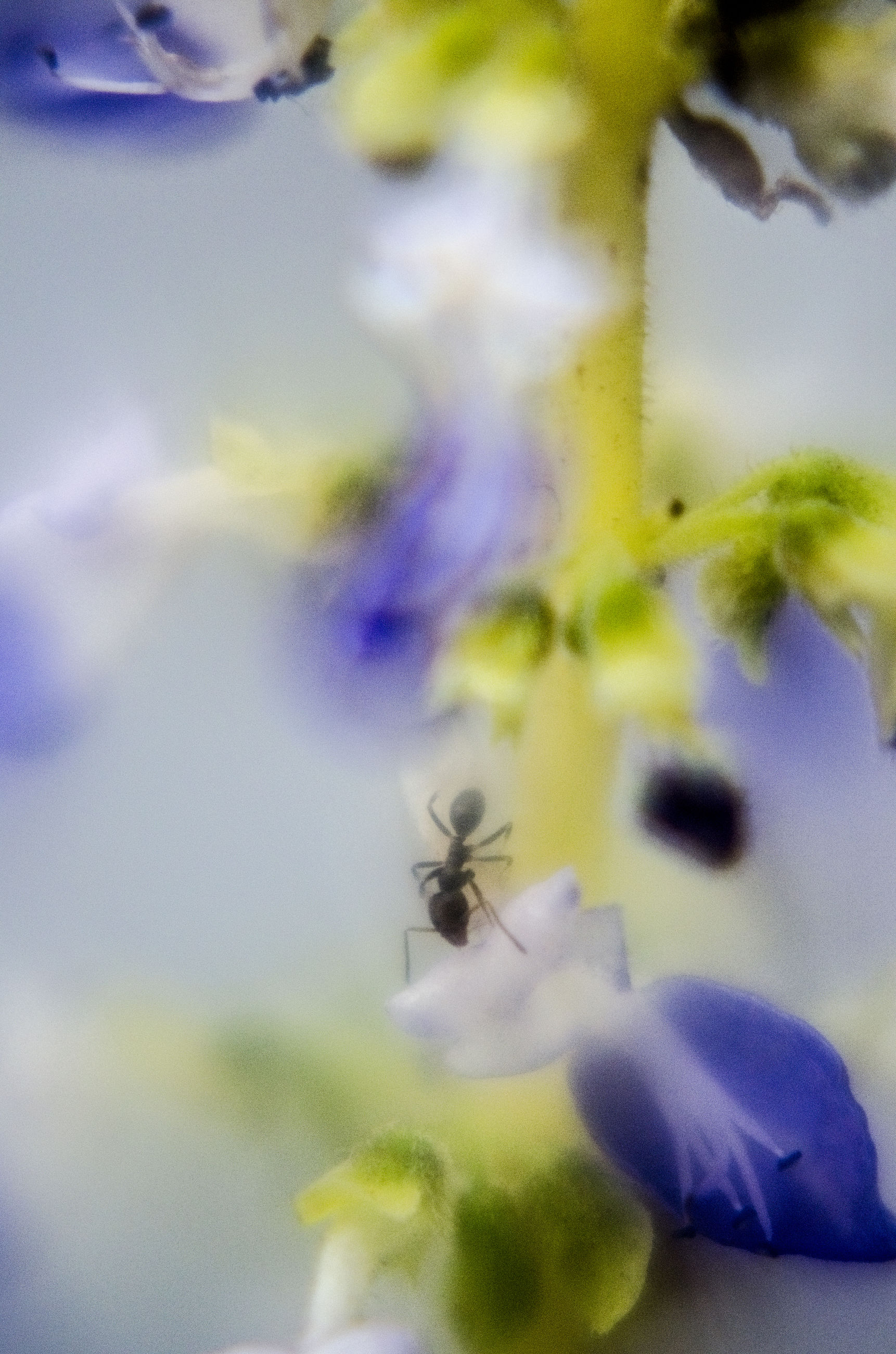 selective focus, close-up, growth, plant, nature, focus on foreground, beauty in nature, no people, indoors, fragility, day, blue, flower, leaf, purple, green color, auto post production filter, sunlight, high angle view