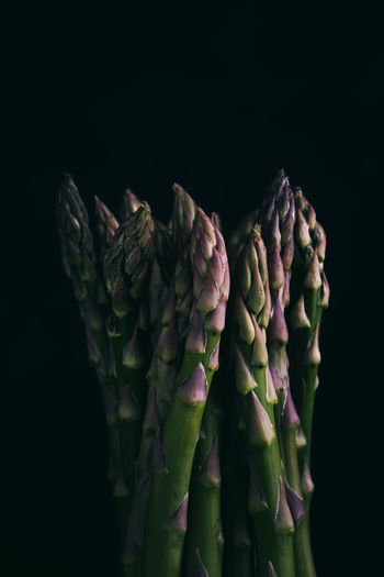 fresh raw green asparagus close up on black background with copy space   food photography Studio Shot Black Background Indoors  Freshness Close-up Food And Drink Healthy Eating Food No People Vegetable Still Life Raw Food Green Color Copy Space Asparagus Green Asparagus Plant Uncooked Food Photography Foodphotography Nikonphotographer Fresh Food Fresh Copy Space