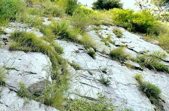Be like a rock from outside But inside like a soft flower patel....😉😉 Place :-(Ayubia-pipeline track) BeautyOfPakistan Pakistan Paki Nature Naturelover Beauty Beautyfulpakistan Travelpakiatan Ig_pakistan Plants Mountain Hight Rocks Im_pakistan Instameetpakistan Discovringpakistan Wheninpakistan WonderfulPakistan Vascopakistan Shutterpak Picturepakistan Vascopakistan Northen Ayubia Instanature amazingartofearth