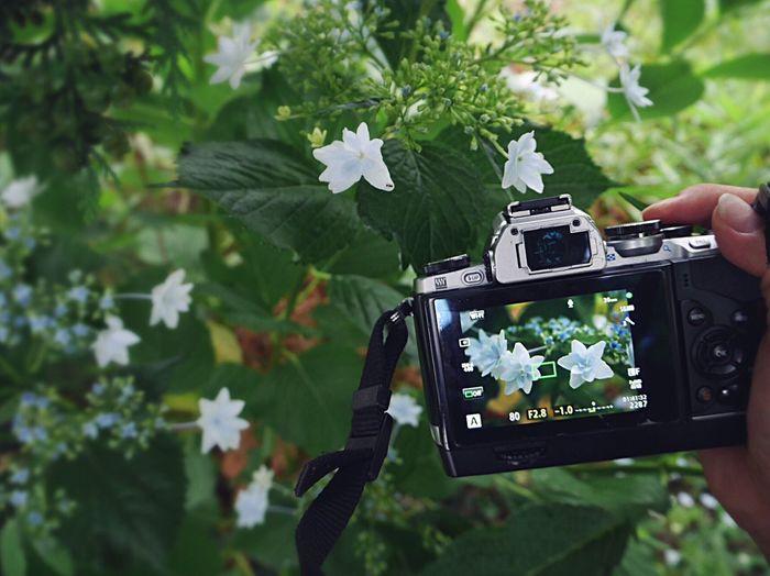 …北鎌倉の紫陽花の小径…雨に濡れる寂しそうな落し物…。もしも…見つけたなら…そっと思い出して…🙏🏼😌✨ それは…きっと…大切な…私のアイキャップ…😭😭💨 My Camera Taking Photos