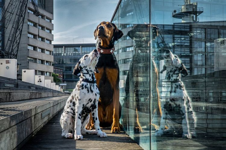 Dogs sitting by glass railing