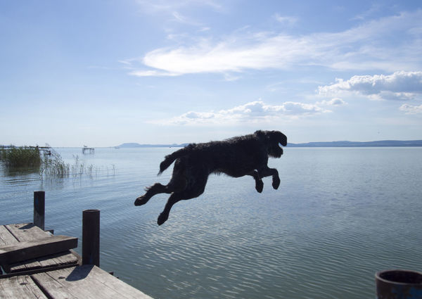 Animal Themes Capture The Moment Clear Blue Sky Clear Sky Cloud - Sky Day Dog Domestic Animals Jump Jumping Jumping Dog Jumping For Joy Lake Lake View Mammal Moments Motion Nature No People One Animal Outdoors Pets Sky Vizsla Water