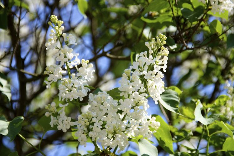 White Flowers On Sunny Day