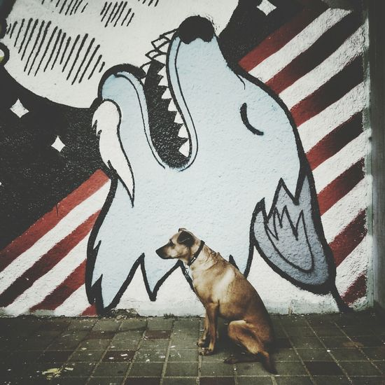 Street Art Street Photography Streetphotography Dogs