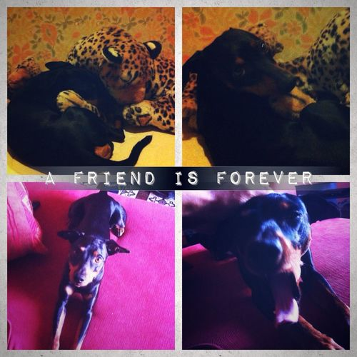 "Mydog Imissyou Mybestfriend ""A friend is forever"" i miss you ❤❤️😔 07.10.2014"