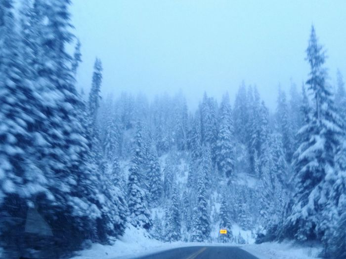 Chinook Pass Snow Beauty In Nature Winter Scenics Snowing No People Winter Treethugger Cold Temperature Streetview