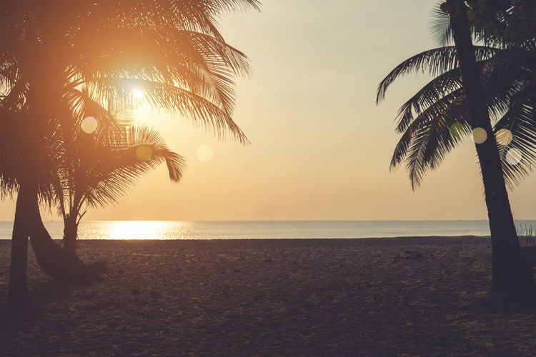 Scenic view of palm trees at beach during sunset