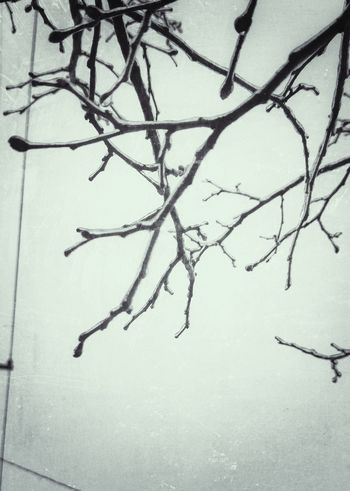 Icy branches Syracuse Ny Teall Ave Eastwood Winter Trees