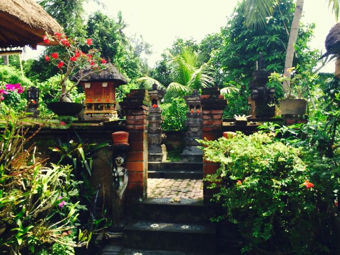 Architecture Bali, Indonesia Beauty In Nature Beauty In Nature Built Structure Day Green Color Nature No People