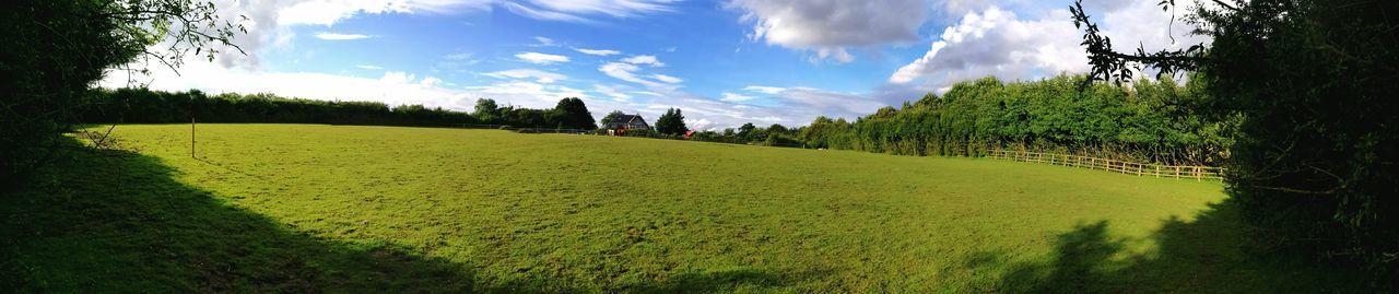 Nature Horses Geeen Grass Farm Blue Sky Animals