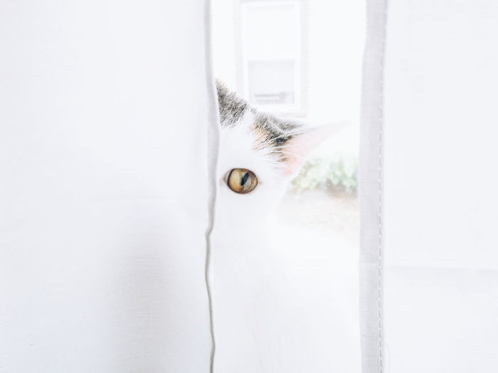 One Animal Pets Animal Themes Hiding Domestic Animals Indoors  Domestic Cat Close-up Eyeball Rethink Things EyeEm Ready   Visual Creativity Focus On The Story The Creative - 2018 EyeEm Awards Creative Space