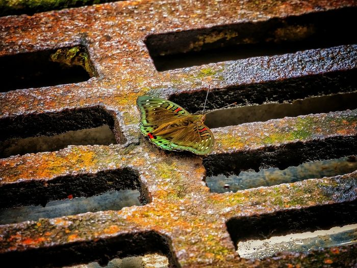 High Angle View Of Butterfly On Sewer
