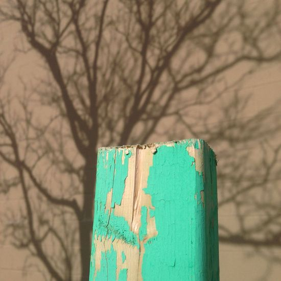 Wood and its recent shadow. Tree Wood Macro Photography Photography Gettyimages Colour Of Life Art Landscape JohnRuggieri Up Close Street Photography