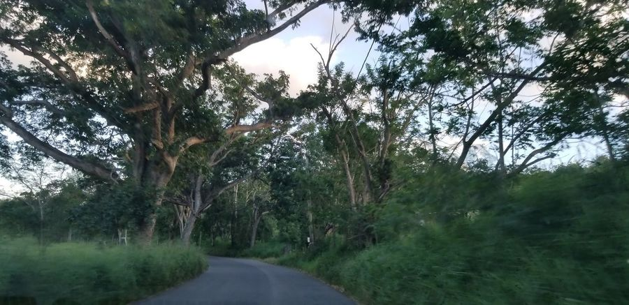 PUERTO RICO 🇵🇷 Country Road Tree Water Branch Forest Tree Trunk Sky Landscape