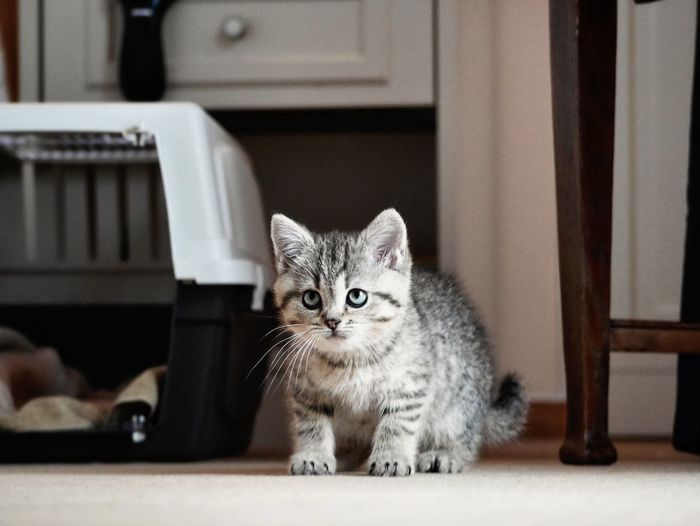 Portrait of kitten sitting at home