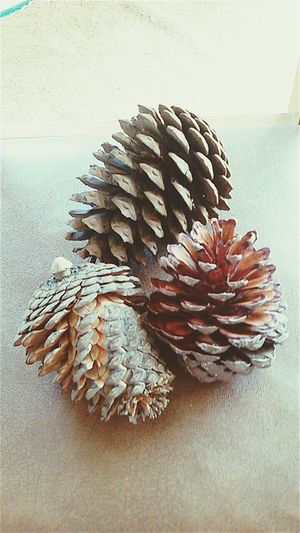 Pinecones Beachlife Upclose  Artisticphotography Dried Out Travels Art Naturalart NaturalBeauty Taking Photos