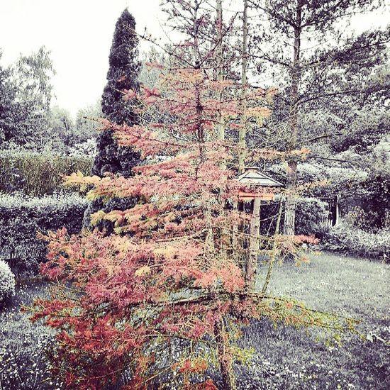 Garten Baum Rasen Instagram instagramfilter