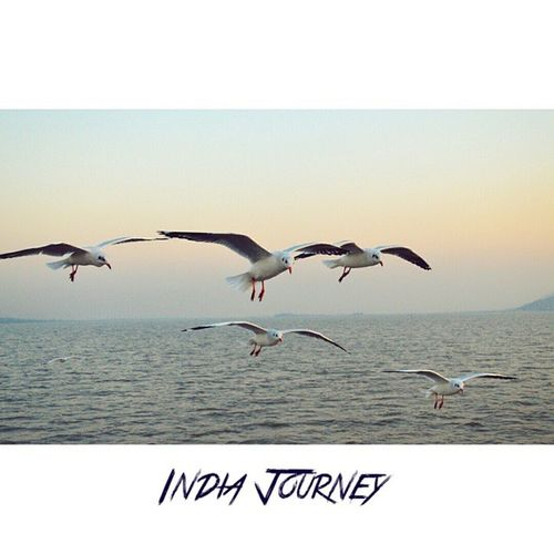 Your wings already exist. All you have to do is fly. Location - Ferry ride from Elephanta Caves, Mumbai, India IndiaJourney Wings