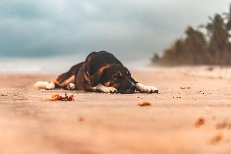Dog resting on sand at beach